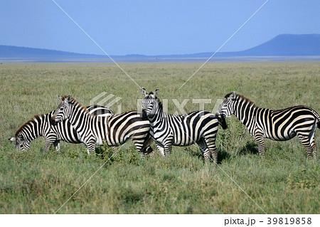 セレンゲティ国立公園の画像 p1_37