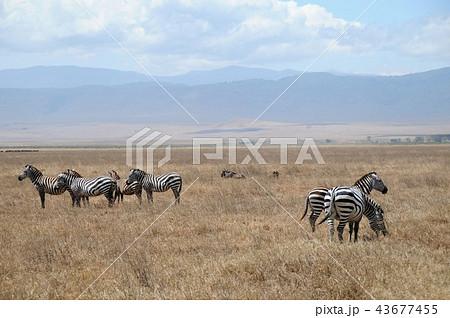 ンゴロンゴロ保全地域の画像 p1_37