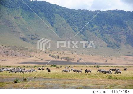 ンゴロンゴロ保全地域の画像 p1_26