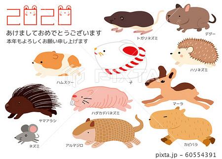 ハダカデバネズミの画像 p1_39