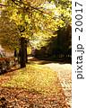 秋の散歩道 20017