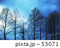 柔らかな木々 53071