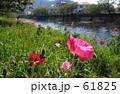 flower riverside 61825