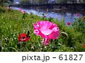 flower riverside 61827