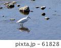 bird white 61828