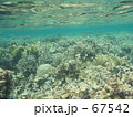 珊瑚の世界 67542