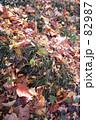 紅葉落葉 82987
