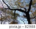 大きな秋の木 82988