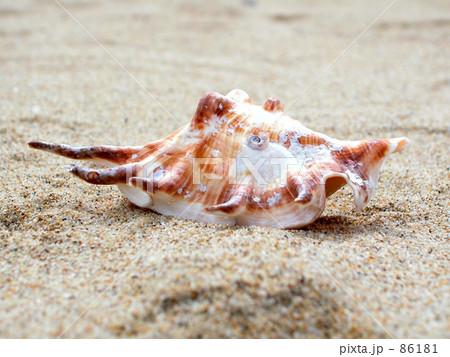 浜辺の貝 86181
