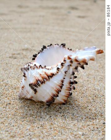 貝がら 86184