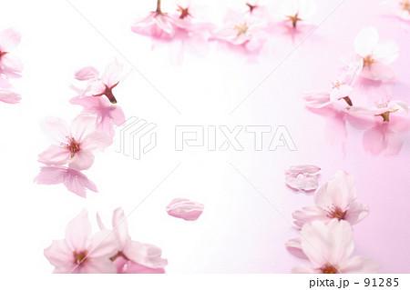 桜背景 91285