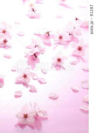 桜背景 91287