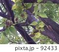 蝉の生る樹 92433