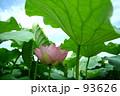 蓮の森 93626