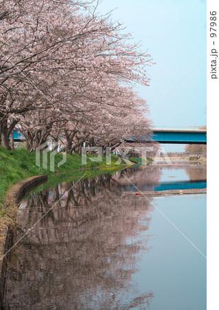 川に写った桜 97986