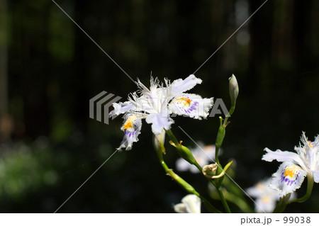 シャガの花 99038