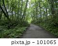 白神山地 山道 101065