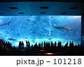美ら海水族館 101218