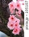 pink 105107