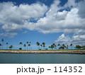 ハワイ 椰子の木 114352