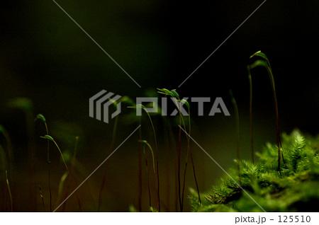 夜の森 125510
