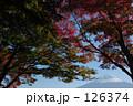 秋と富士山 126374