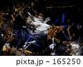 霜柱 165250