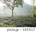 杭州・龍井茶畑 165417