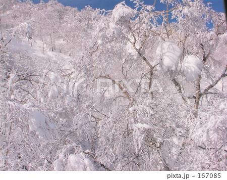 苗場樹氷 167085