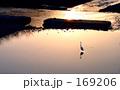 heron alone 169206