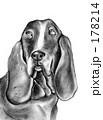 犬 178214