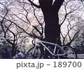 桜と自転車 189700