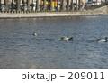 サンマルタン運河の水鳥 209011