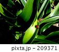 緑の中の赤 209371