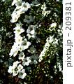 白い花 209381