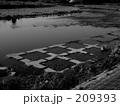 River 209393