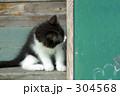 黒板と子ネコ 304568