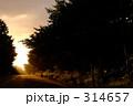 道路 山道 林道の写真 314657