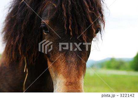 馬との会話 322142