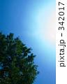 夏の訪れ 342017