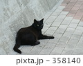 にゃんこ ネコ 黒猫の写真 358140