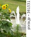 ヒマワリ ひまわり 向日葵の写真 361531