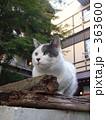 温泉街和猫 363600