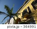 パームツリー 木 建物の写真 364991