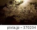 足下の桜 370204
