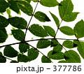 葉っぱ 377786