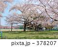 青葉ヶ丘公園 378207
