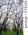 青葉ヶ丘公園 378220