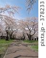 青葉ヶ丘公園 378233
