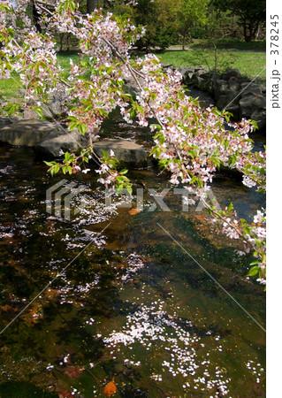青葉ヶ丘公園 378245